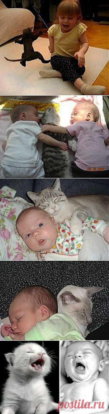 (+1) тема - Ребята и котята | ЛЮБИМЫЕ ФОТО