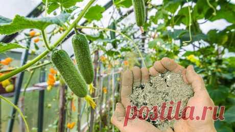 Чем удобрять огурцы в июле для отличного урожая