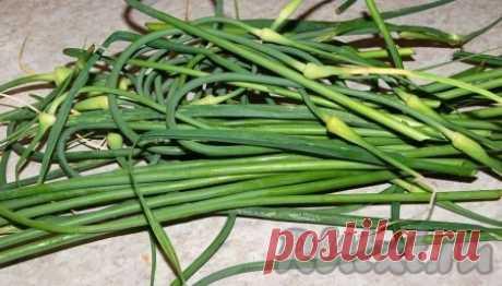 Заготовка из стрелок чеснока - рецепт с фото