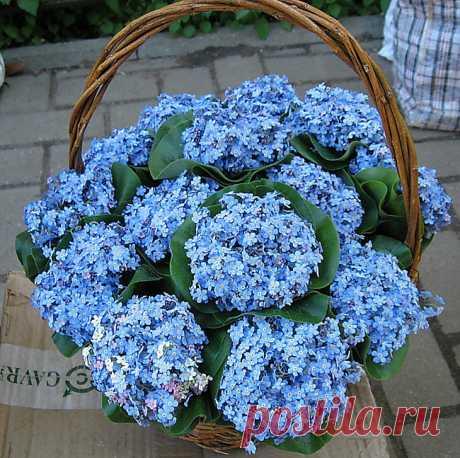 Подарю тебе » Цветы
