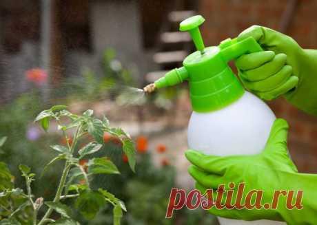Универсальный календарь обработок сада, огорода и цветника — Ботаничка.ru