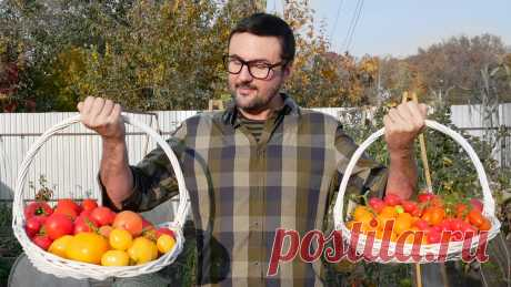 Лучшие сорта и гибриды помидор сезона 2020 | Виталий Декабрев | Яндекс Дзен