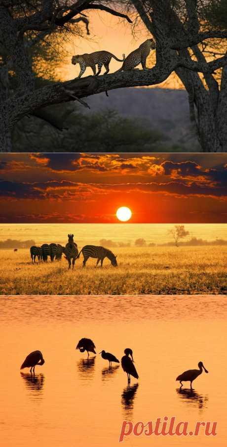 Животные на закате | Life on Photo