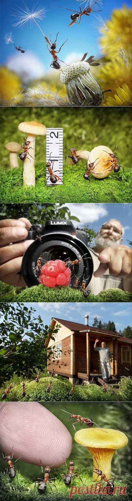 Муравьиные истории. Андрей Павлов (38 фото) » Картины, художники, фотографы на Nevsepic