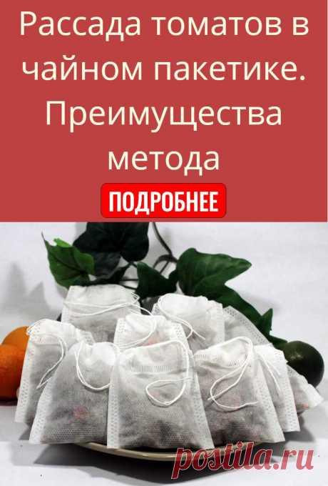Рассада томатов в чайном пакетике. Преимущества метода