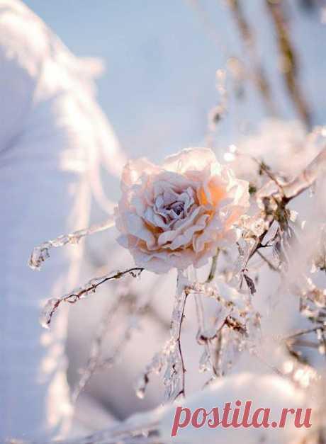 Нет ничего лучше свежего морозного воздуха, деревьев одетых в серебро!