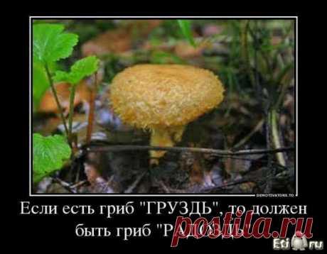 ищем свой гриб!