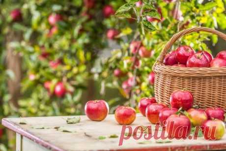 Что не забыть сделать в августе садоводу? Сезонные работы в саду. Фото — Ботаничка.ru