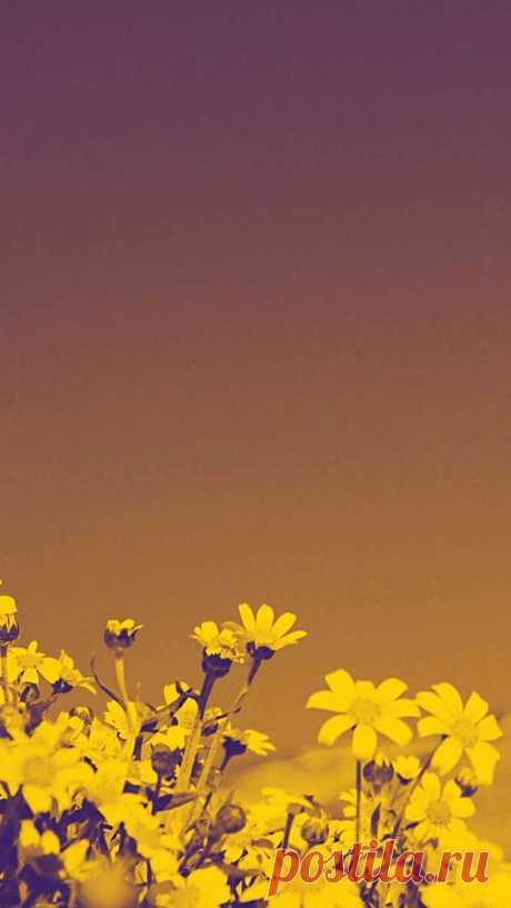 Фон для сторис. Идеи, как оформить Инстаграм Stories. Красивый фон для сториз с цветами. Фоны | Background для ваших проектов, фоны для сторис инстаграм, фоны на телефон, фоны для блогов, фоны…
