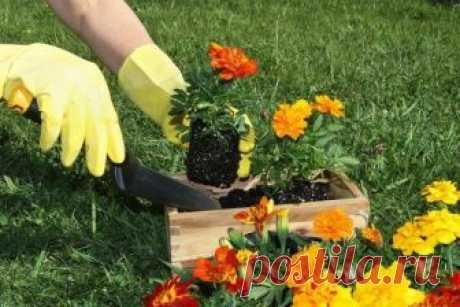 Руки после огорода.