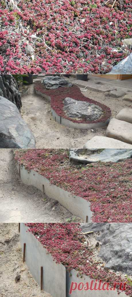 """Pink sedum. Look as beautifully it looks with 2 big flat black stones. Growth of a sedum is limited to the metal strip which is carrying out function of a bordyurny tape. Before end of composition remained a little: filling of soil or sand (dumping) to the level of \""""a bordyurny tape\""""."""
