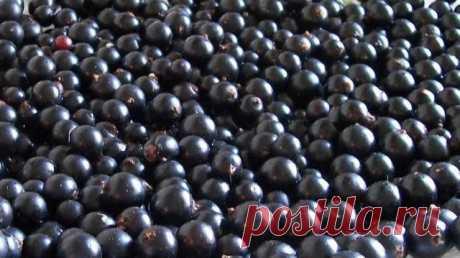 11 лечебных свойств черной смородины — Полезные советы