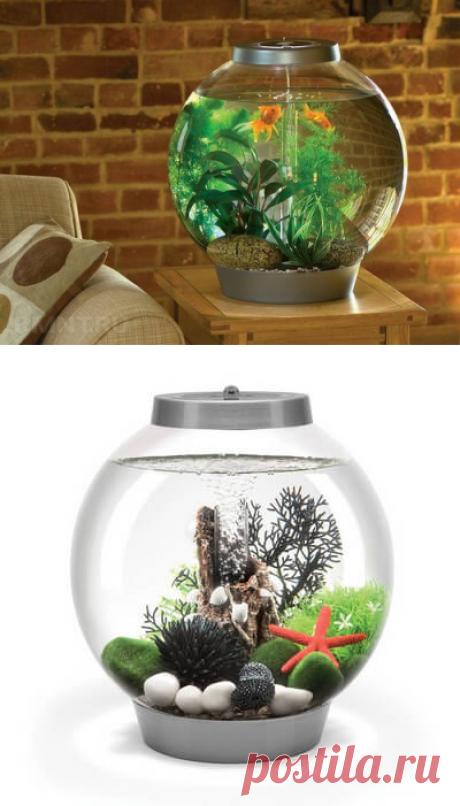 Какой аквариум лучше выбрать: виды и конструкции