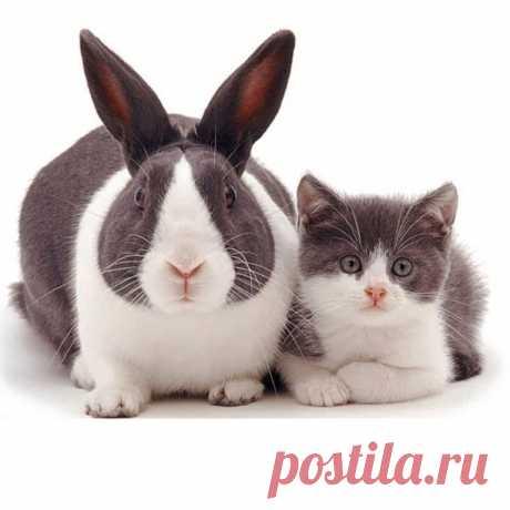 Братья не по крови. 10 фотографий животных-«близнецов» - Питомцы Mail.ru