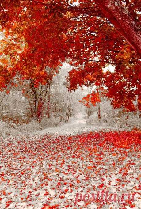 Волшебные сады как из сказки: 30 зимних фото — Roomble.com