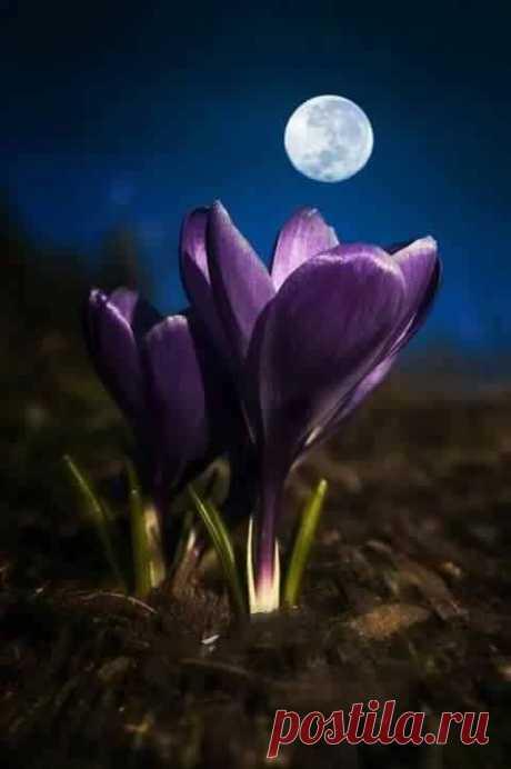 "angel-kiyoss: ""Beautiful flower and moon !! """