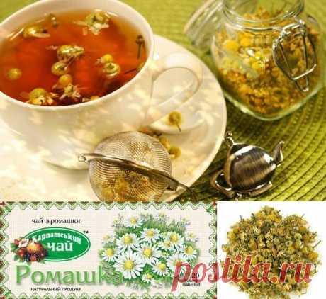 Чай из ромашки: свойства, состав, польза, использование, противопоказания  Чай из ромашки свойства и состав. Польза для организма. Использование чая из ромашки в домашних условиях, для лечение и в косметологии. Приготовление и противопоказания.