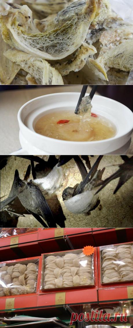 🎁 Перенаселение Китая явило миру дорогой деликатес - ласточкины гнезда | 🎁 СУПЕР ПОДАРОК 🎁 | Яндекс Дзен