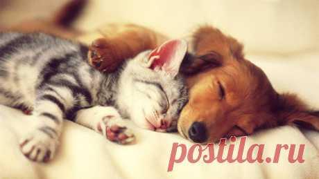 cute-cat-and-dog-1920x1080.jpg (1920×1080)