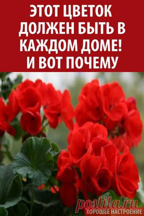Этот цветок должен быть в каждом доме! И вот почему