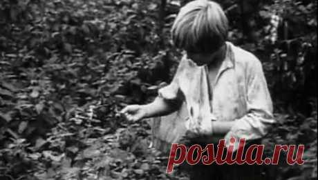 Незаслуженно забытые детские фильмы о войне - 9   131-ая рассказка   Яндекс Дзен