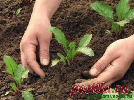 С огорода — с чистыми руками | Азбука садовода