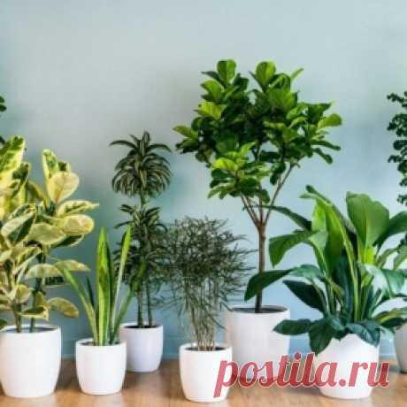 Проводница придумала способ полива комнатных растений… Сколько бы она ни находилась в рейсе, ее цветы не увядают!