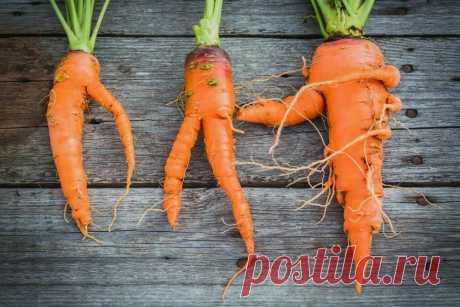 Удобрения - через 6 недель после посадки. Как вырастить красивую морковь