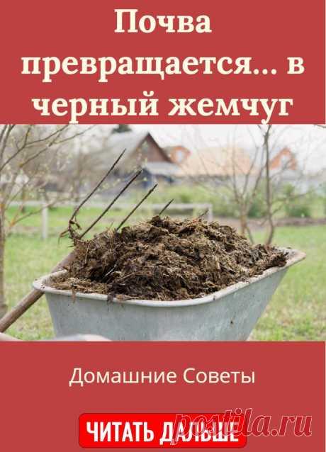 Почва превращается… в черный жемчуг