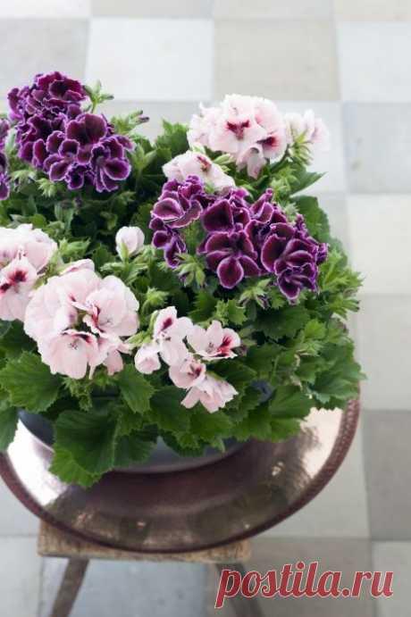 Мобильный декор: цветы в контейнерах - Страница 25 - Форум Дачный ответ Галактики