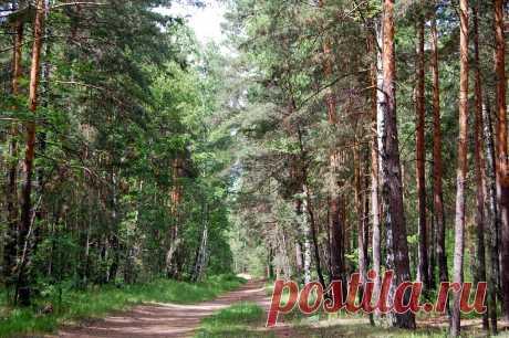 В лесу 3