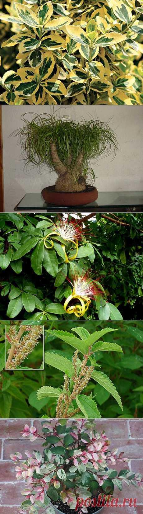 -  декоративно лиственные растения