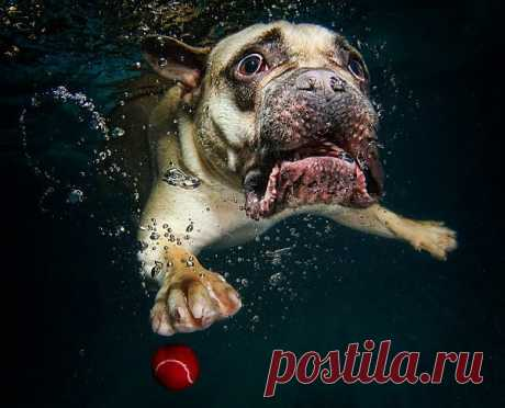 Удивительная подводная фотосессия собаки   Живой фотоблог