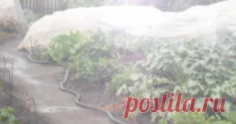 Вкусный Огород: Защита урожая от птиц