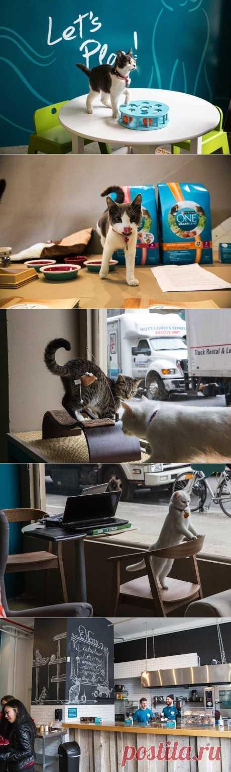 Кошачье кафе в Нью-Йорке / Туристический спутник