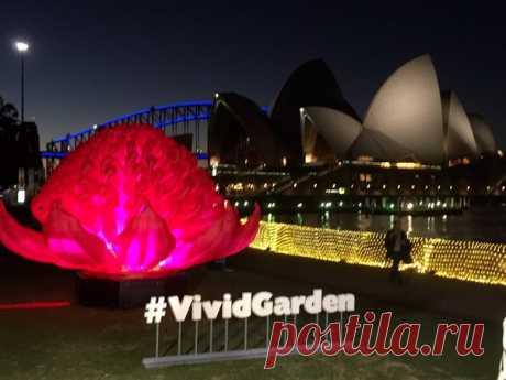 Световая инсталляция Vivid Garden в Сиднее / Любимая Азия