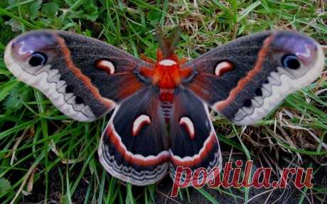 Этот удивительный мир!             Бабочки, как снежинки, не повторяются...