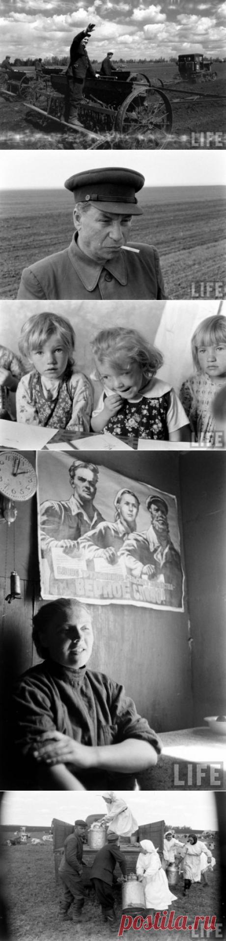 Экономическое чудо СССР глазами американца. Летом 1958 года корреспондент журнала LIFE Говард Дж. Сочурек посетил СССР. Его целью было запечатлеть экономическое чудо Советского Союза — поднятие целины. Новые поселки с полной инфраструктурой в местах где еще несколько лет назад была только степь.