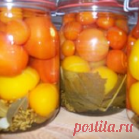 Соленые помидоры - 5 лучших рецептов на зиму в банках. Как солить помидоры в банке на зиму