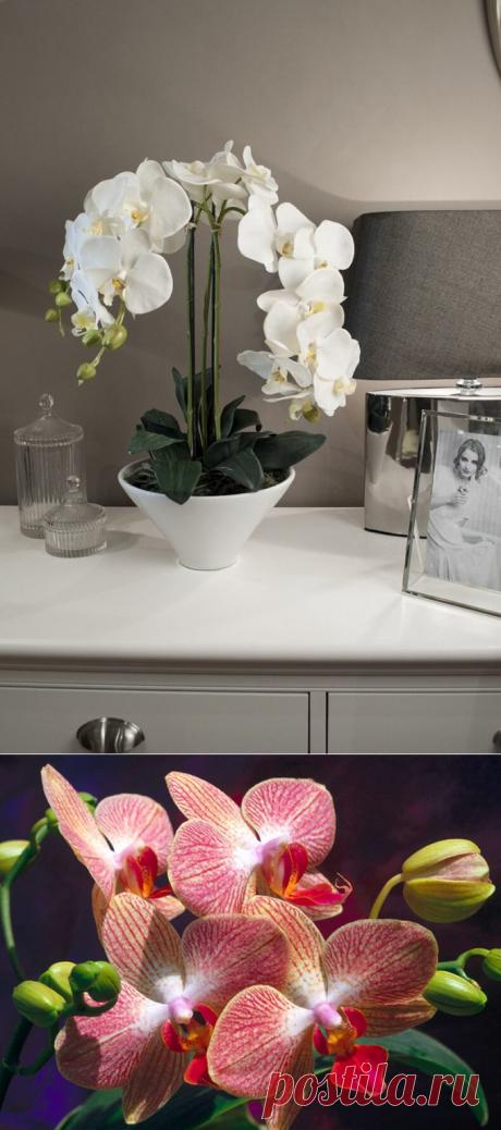 Выполняй 9 правил и ваша орхидея будет цвести круглый год! | 6 соток