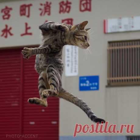Эти котики владеют особым стилем кунг-фу