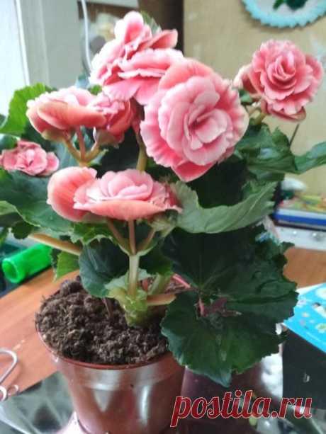 Хитрости цветоводов: Что положить в горшок, чтобы комнатные растения пышно цвели | Жизнь комнатных растений | Яндекс Дзен