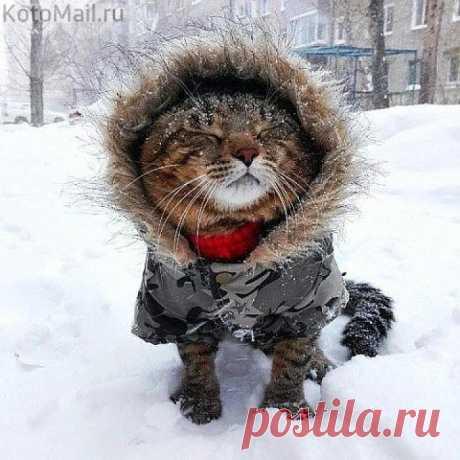Snow, snowball white blizzard...
