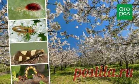 Все вредители сада – фото, названия, описания и меры борьбы | Дела огородные (Огород.ru)