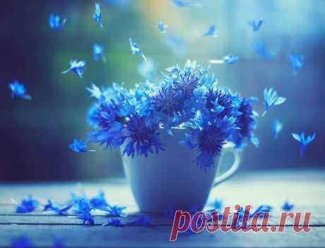 Восхитительные фотографии Ашрафула Арефина Сегодня зарядимся позитивной энергией от восхитительных фотографииАшрафула Арефина.