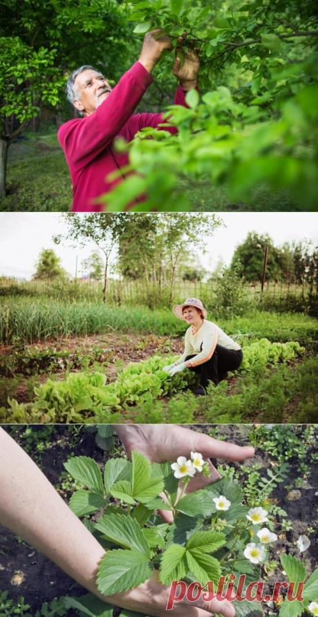 Что делать в июне – 30 самых важных дел в саду, огороде и цветнике   Новости (Огород.ru)