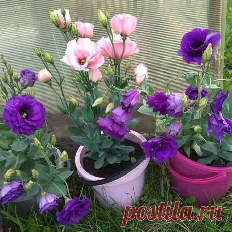 На изображении может находиться: растение, цветок и природа