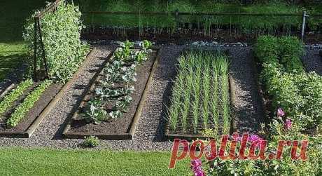 """Как одно растение готовит удобрение для другого  У каждого растения свое """"меню"""". Меняйте растения местами, и вам не нужно будет дополнительно удобрять почву, ведь она не будет истощаться. Существует общее правило: культура возвращается на свое место не раньше чем через 3 - 4 года. Однако наобум поменять местами разные растения нельзя. Нужно понимать, зачем вы это делаете?  Вот самые распространенные схемы посадки: - после лука и чеснока можно высаживать все культуры. Повто..."""