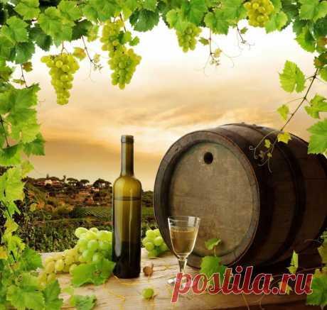 Обработка винограда весной от болезней и вредителей, перед укрытием на зиму, схема защиты