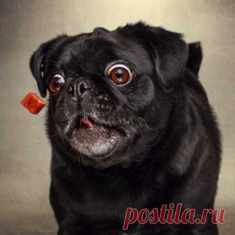 Gallery.ru / Фото #5 - Позитив!!!! - miroslava388